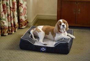 【ホテル椿山荘東京】愛犬も極上ベッドでリラックス。シーリードッグベッドをご用意した「愛犬と一緒に過ごす贅沢ステイ」を4月12日より提供開始