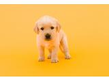 一般社団法人 盲導犬総合支援センター